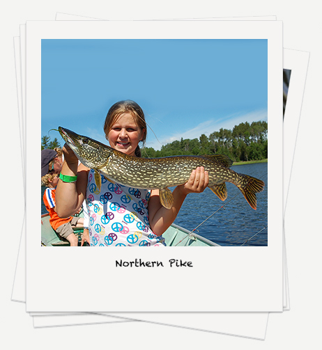 Northern Pike fishing on Rowan Lake