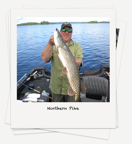Northern Pike Photos