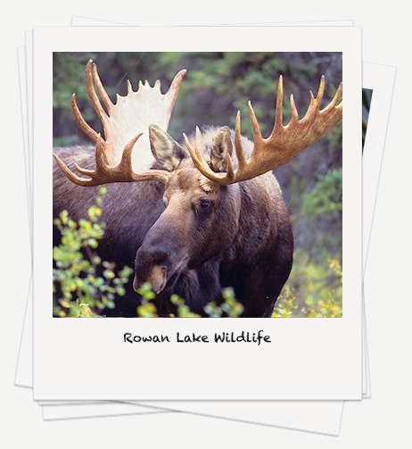 Rowan Lake Wildlife Photos